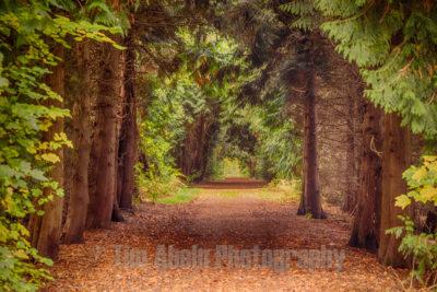 Forest road near Schloss Moyland