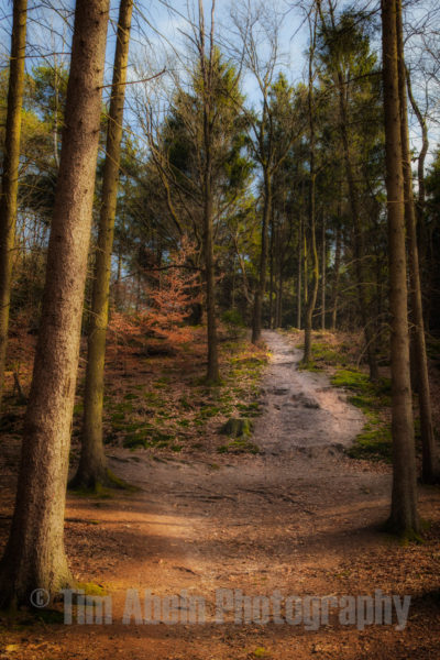 This photo was taken on 'de Veluwe', a national park in the netherlands.