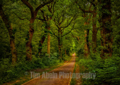 A small forest lane in Doorwerth, a beautiful small village in the Netherlands.