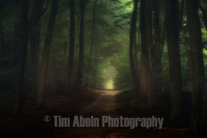Beautiful morning in Speulderbos forest by Tim Abeln Photography and Digital Art Prints. Beautiful wall decoration for your home and office.