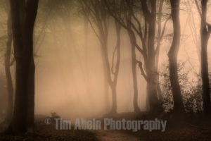 Follow the Light by Tim Abeln Photography and Digital Art Prints. Beautiful wall decoration for your home and office.