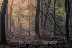 Good morning Speulderbos by Tim Abeln Photography and Digital Art Prints. Beautiful wall decoration for your home and office.