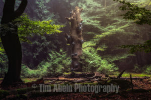 Mushroom tree by Tim Abeln Photography and Digital Art Prints. Beautiful wall decoration for your home and office.