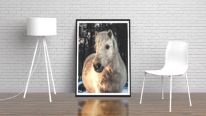 Horse Portrait by Tim Abeln Photography and Digital Art Prints. Beautiful wall decoration for your home and office.