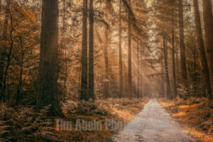 Autumn in the forest by Tim Abeln Photography and Digital Art Prints. Beautiful wall decoration for your home and Office.