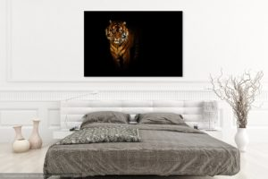 Tiger on a black background by Tim Abeln Photography and Digital Art Prints. Beautiful wall decoration for your home and office.